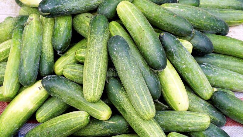 Vegetais orgânicos do pepino fresco no mercado do fazendeiro imagem de stock royalty free