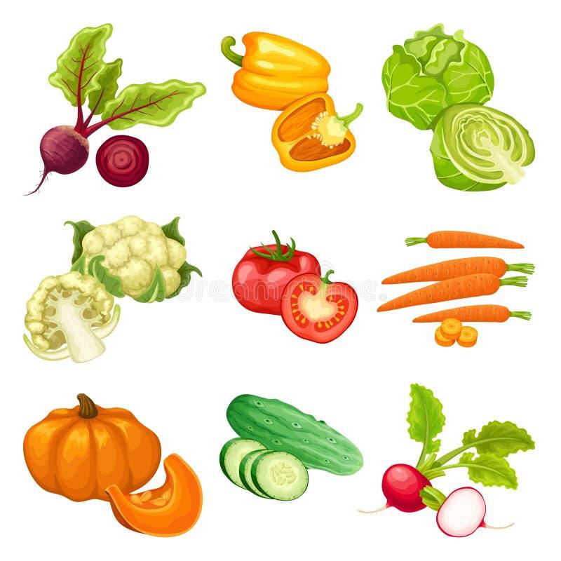 Vegetais orgânicos dos desenhos animados ajustados ilustração do vetor