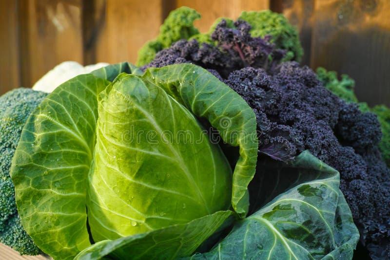 Vegetais orgânicos frescos - couve aguçado verde e couve encaracolado fotos de stock