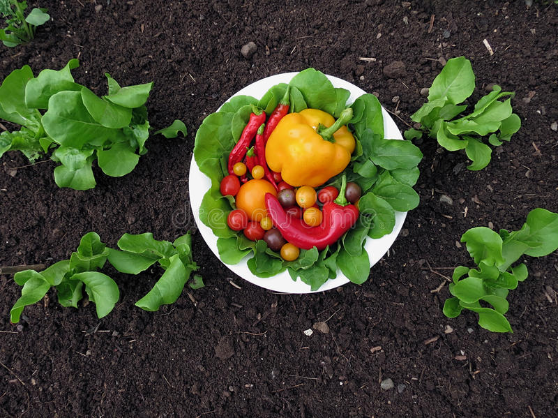 Vegetais orgânicos frescos do jardim foto de stock