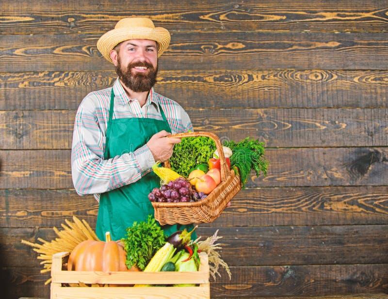 Vegetais org?nicos frescos na cesta de vime e na caixa de madeira Equipe o fazendeiro farpado alegre perto do fundo de madeira do foto de stock