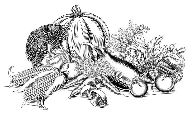 Vegetais retros do bloco xilográfico do vintage ilustração do vetor