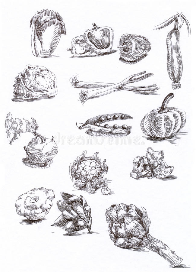 Vegetais sazonais ilustração royalty free