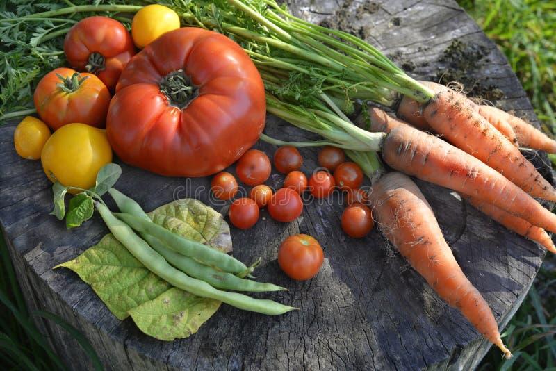 Vegetais sazonais imagem de stock royalty free