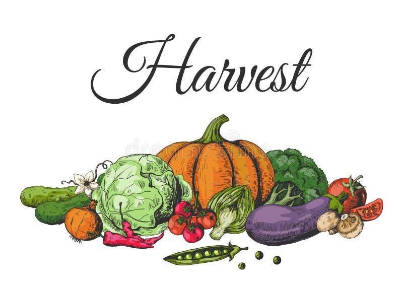 Vegetais tirados coloridos Coleção colorida do esboço do alimento, vegetal saudável do jardim do vegetariano Dieta orgânica do fu ilustração do vetor