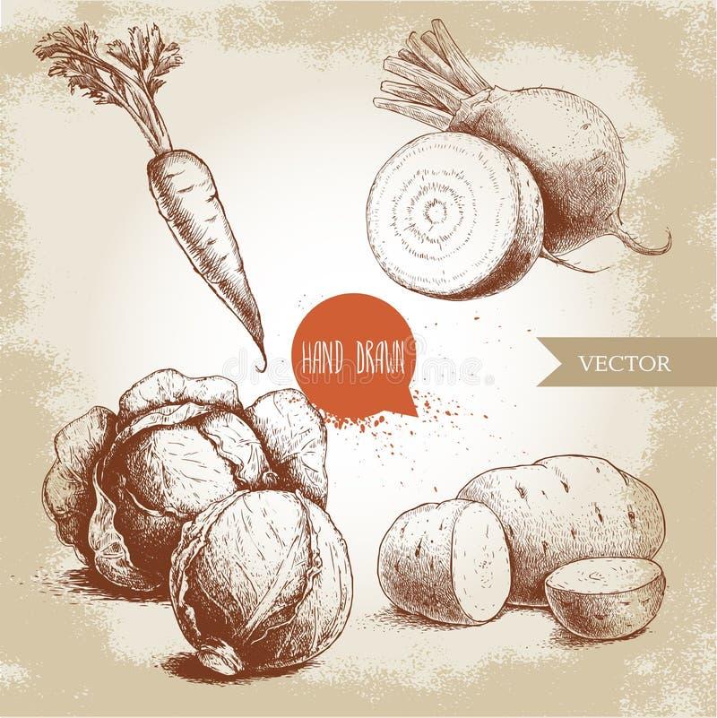 Vegetais tirados mão do estilo do esboço ajustados Metade das couves, das raizes da beterraba, das batatas e da cenoura com folha ilustração do vetor