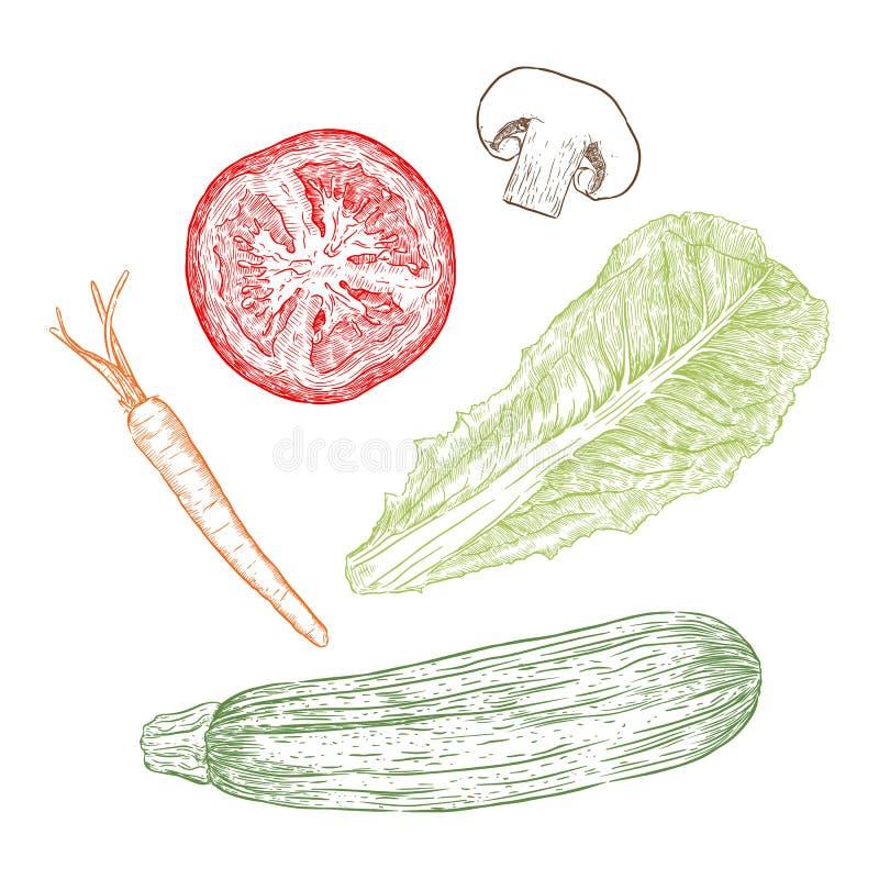 Vegetais tirados mão do estilo do esboço ajustados cenoura, mishroom, zucchi ilustração royalty free