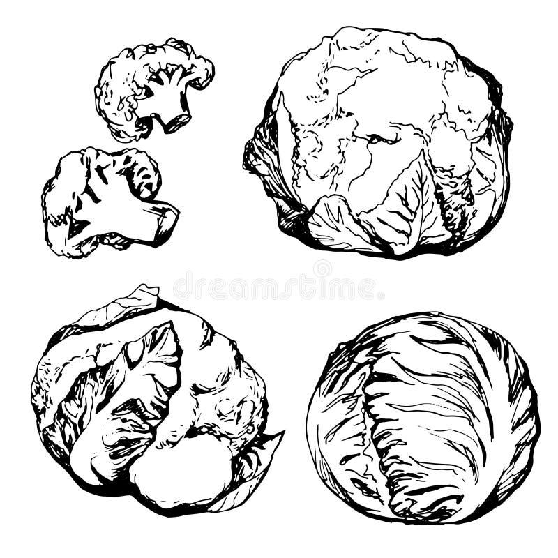 Vegetais verdes tirados mão ilustração do vetor