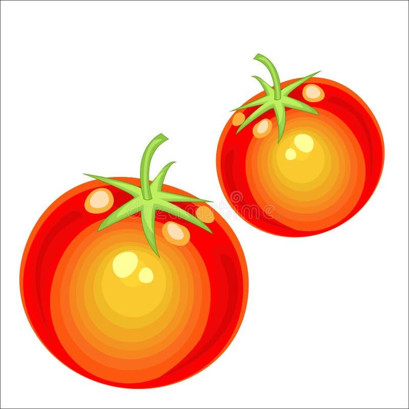 Vegetal bonito maduro Tomate delicioso suculento, uma fonte de vitaminas úteis e elementos de traço Elemento essencial no cozimen ilustração stock