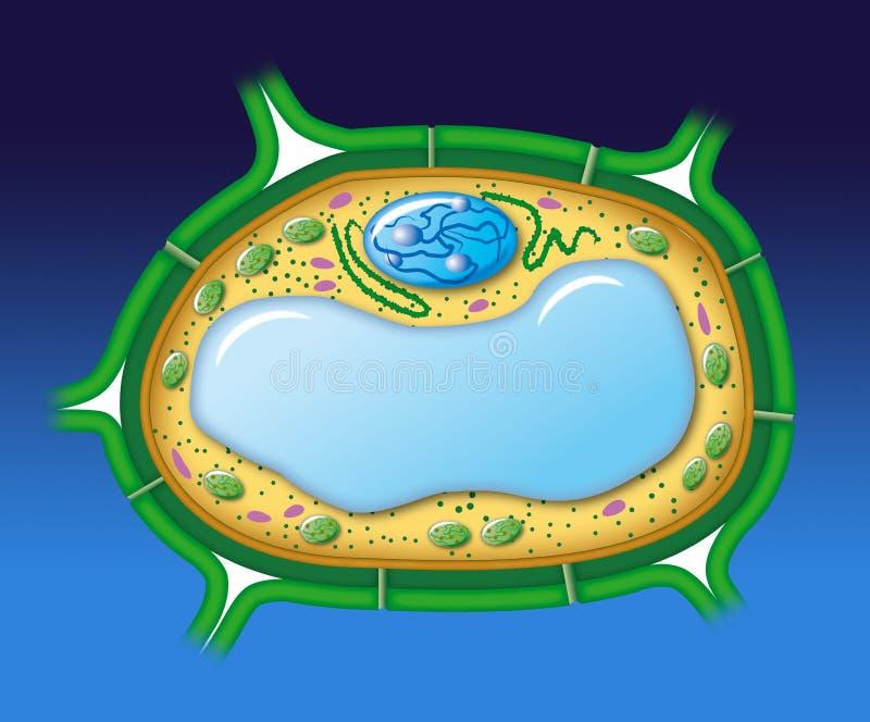 Vegetal cell royalty free illustration