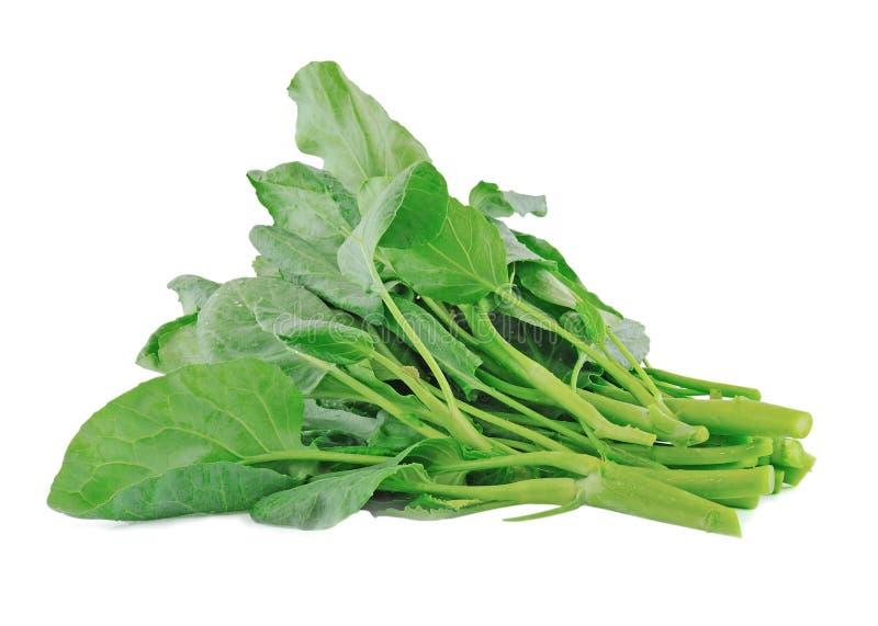 Vegetal chinês da couve imagem de stock