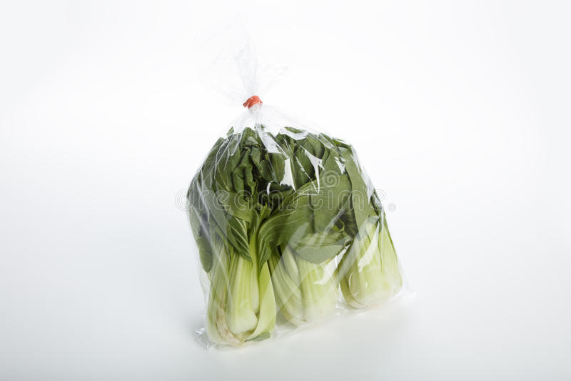Vegetal choy de Bok imagens de stock