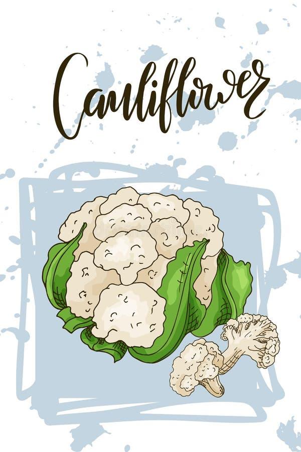 Vegetal colorido do esboço Cartaz saudável do alimento Projeto do mercado dos fazendeiros com couve-flor Ilustração do vetor ilustração royalty free