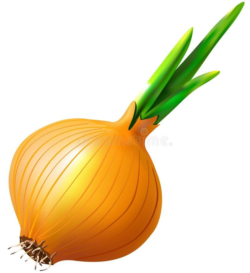 Vegetal da cebola ilustração do vetor