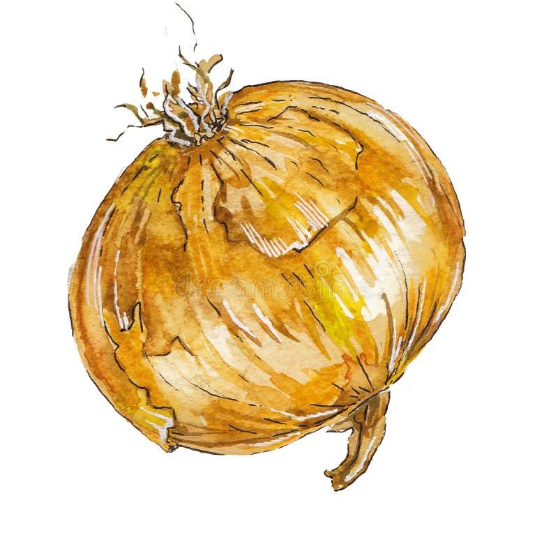 Vegetal da cebola da pintura da aquarela foto de stock royalty free