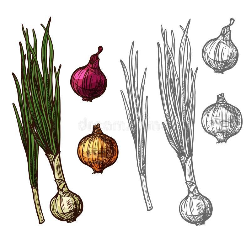 Vegetal da cebola ou da chalota com esboço verde da folha ilustração do vetor