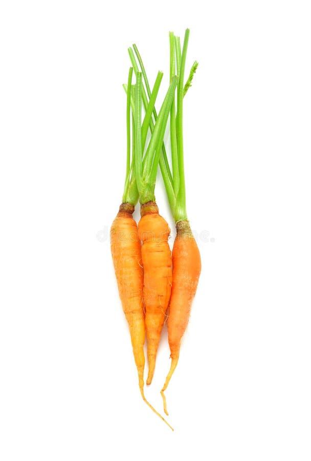 Vegetal da cenoura com as folhas isoladas no fundo branco foto de stock