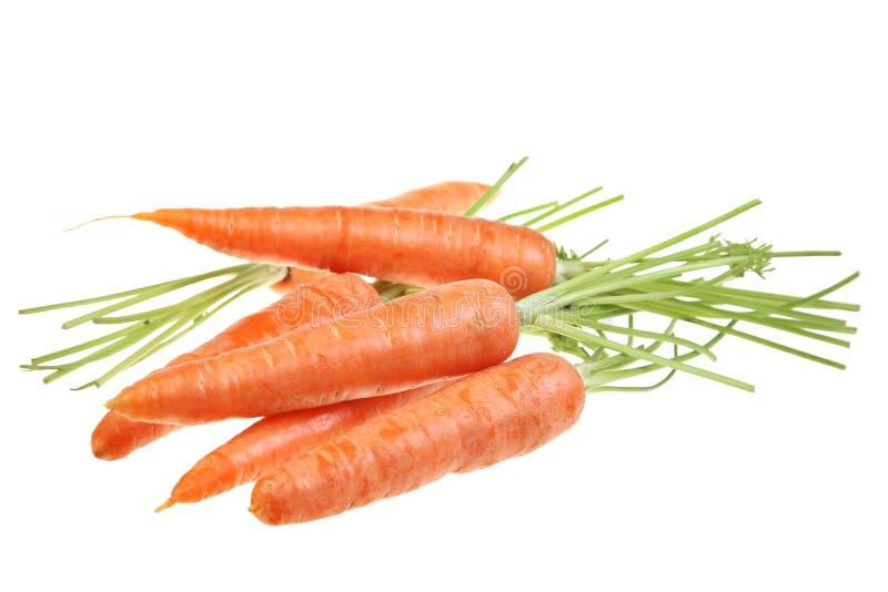 Vegetal da cenoura no branco fotografia de stock