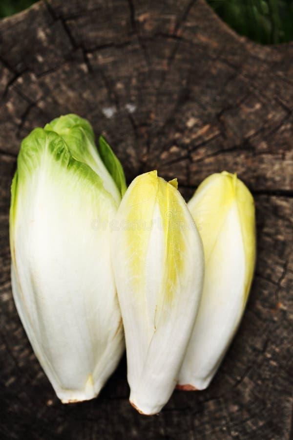 Vegetal da chicória, vista superior fotos de stock royalty free