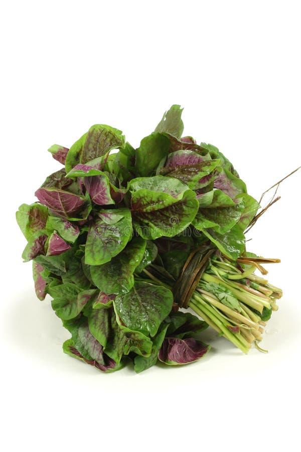 Vegetal do amaranto fotografia de stock