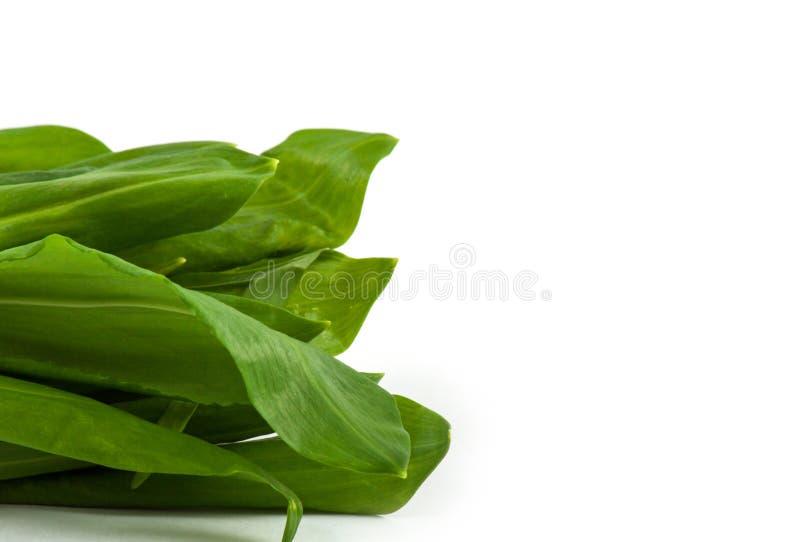 Vegetal do grupo de Ramson imagens de stock