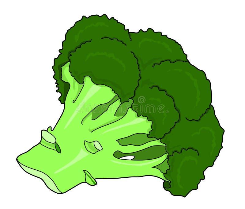 Vegetal dos brócolis imagem de stock royalty free