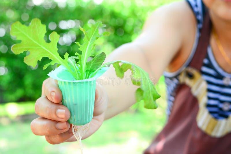 Vegetal hidropônico da mostra da mulher crescido em casa imagem de stock royalty free