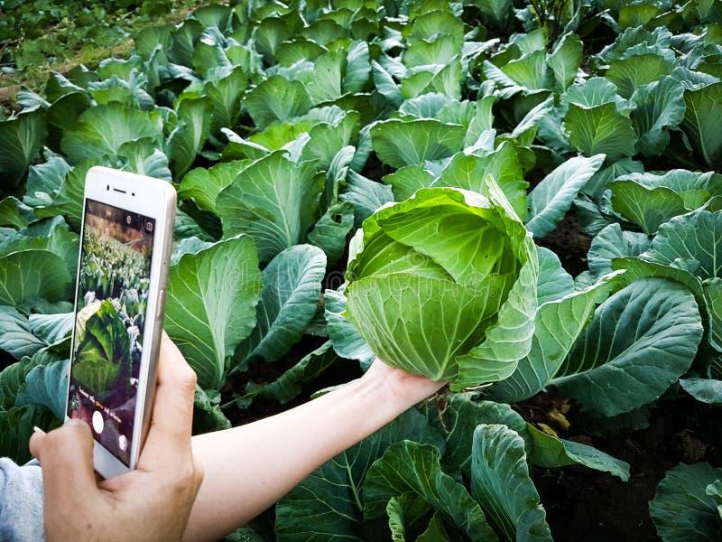 Vegetal novo da foto de Taking do fazendeiro no telefone celular, exploração agrícola esperta moderna orgânica 4 de Eco 0 conceit fotografia de stock