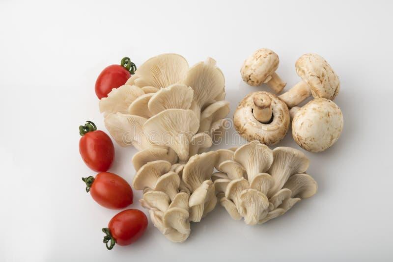 Vegetal: Opinião superior cogumelos da ostra e de botão com os tomates vermelhos do bebê no fundo branco imagens de stock