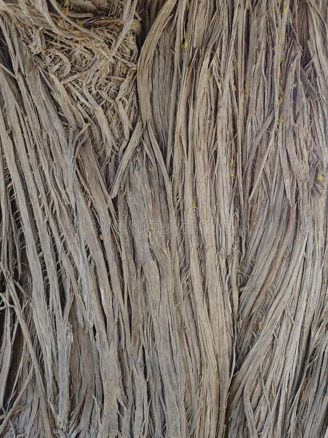 Vegetal textur arkivbild