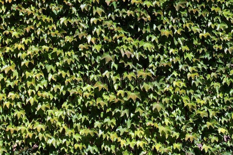 Vegetal texture royalty free stock photos