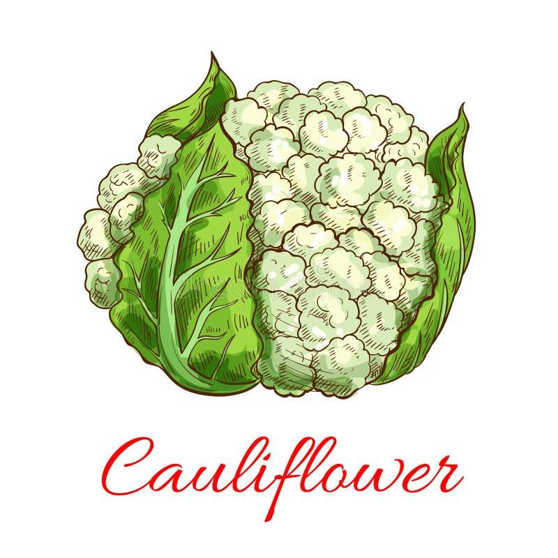 Vegetal verde do vetor da couve-flor ilustração stock