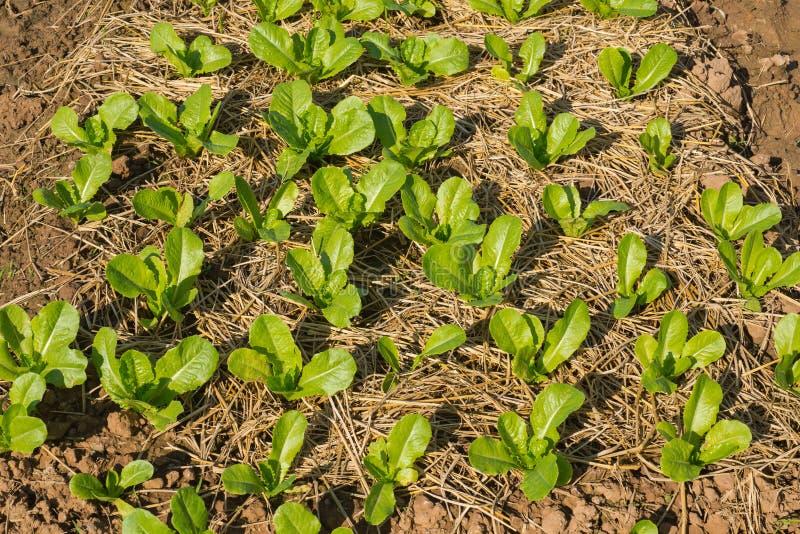 Vegetal verde novo fotografia de stock royalty free