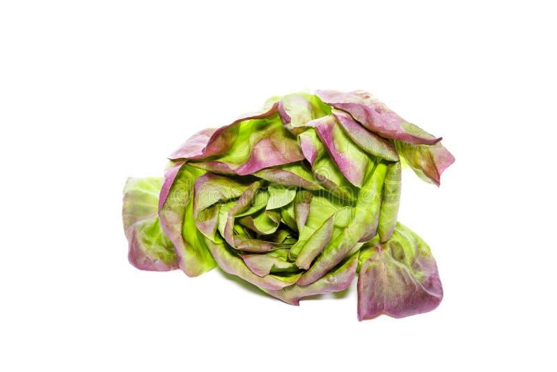 Vegetal vermelho da alface de butterhead no fundo branco fotos de stock