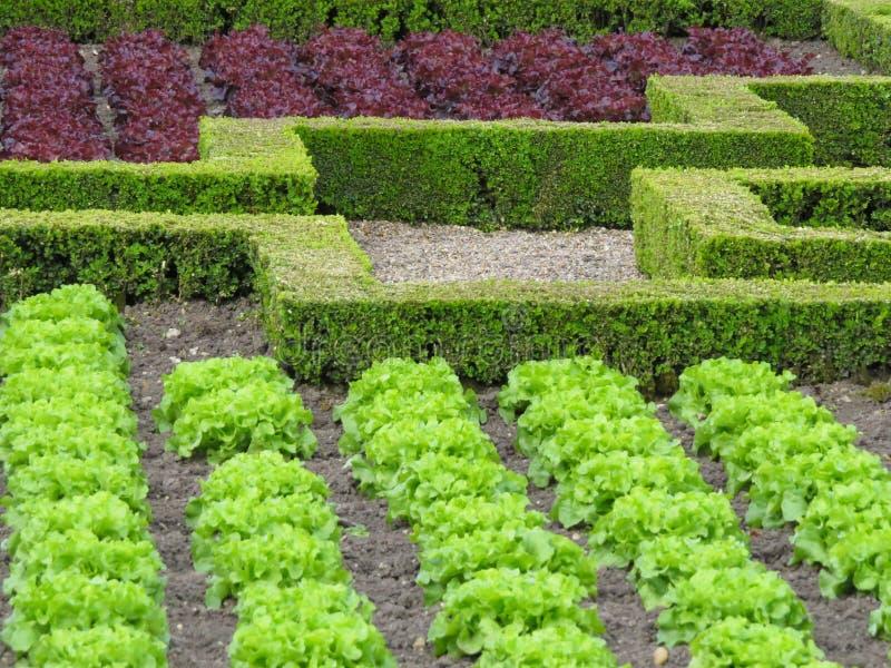 Vegetarisch ingrediënt royalty-vrije stock afbeeldingen