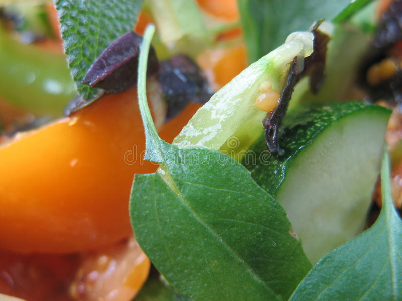 Vegetarische Salade met Sage Leaves royalty-vrije stock foto