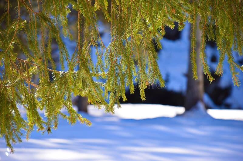 Vegetatie in de winter stock afbeelding