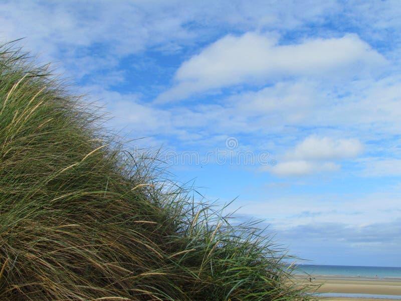Vegetatie op het zandige strand in Frankrijk stock foto