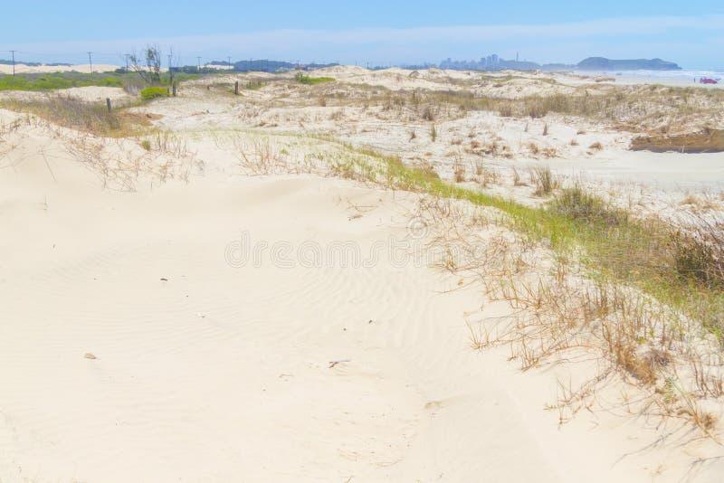 Vegetatie over duinen bij Itapeva-Park in Torres-strand royalty-vrije stock foto