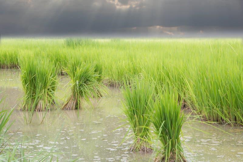 Vegetatieperiode stock fotografie