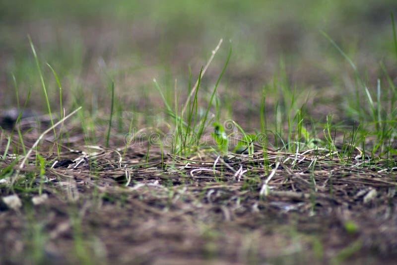 vegetation lizenzfreies stockfoto