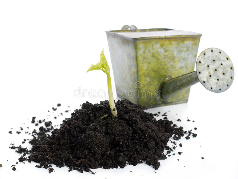 Vegetation stock photo