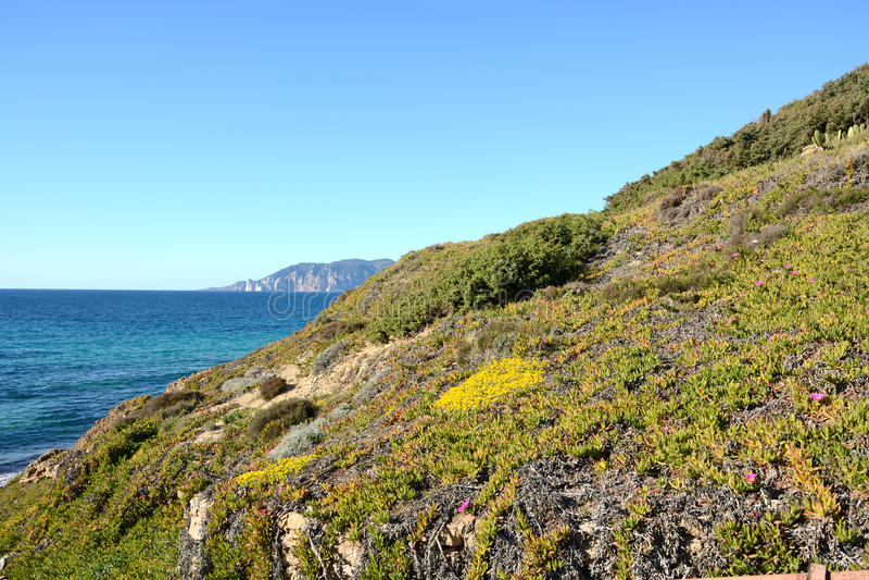 Vegetation along the coast royalty free stock photography