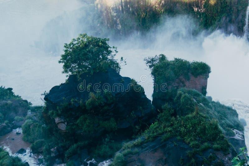 Vegetation bei den Igua?u-Wasserf?lle in Argentinien lizenzfreies stockfoto
