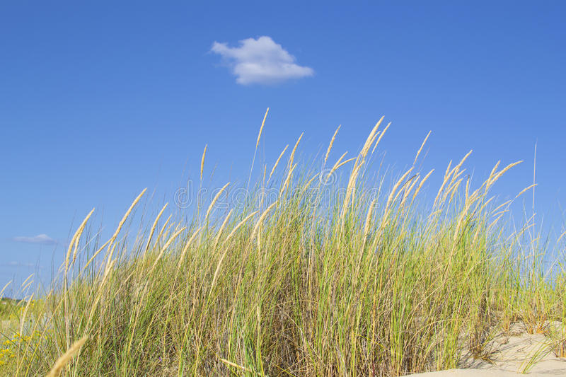 Download Vegetation Blown By The Wind Stock Image - Image: 31804435