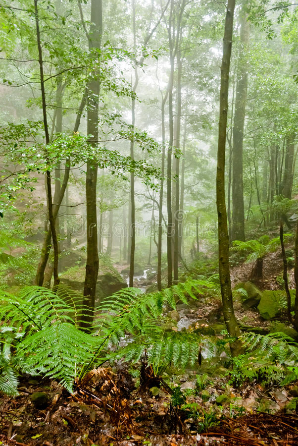Vegetation in Blue Mountains National Park, NSW stock photos