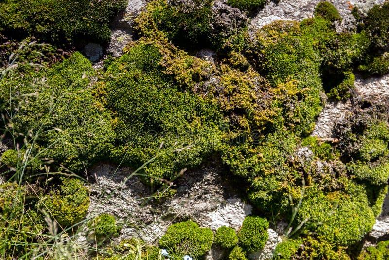 Vegetation in den Bergen stockbild