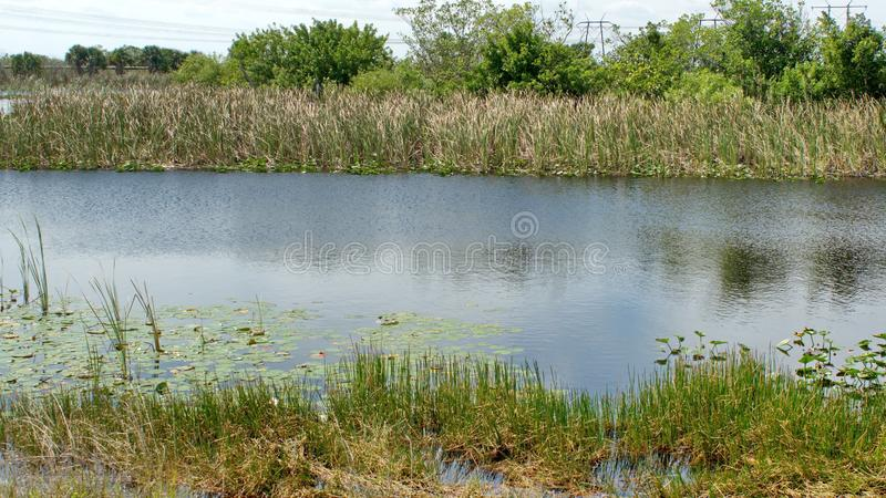 Vegetation in den Sumpfgebieten lizenzfreies stockbild