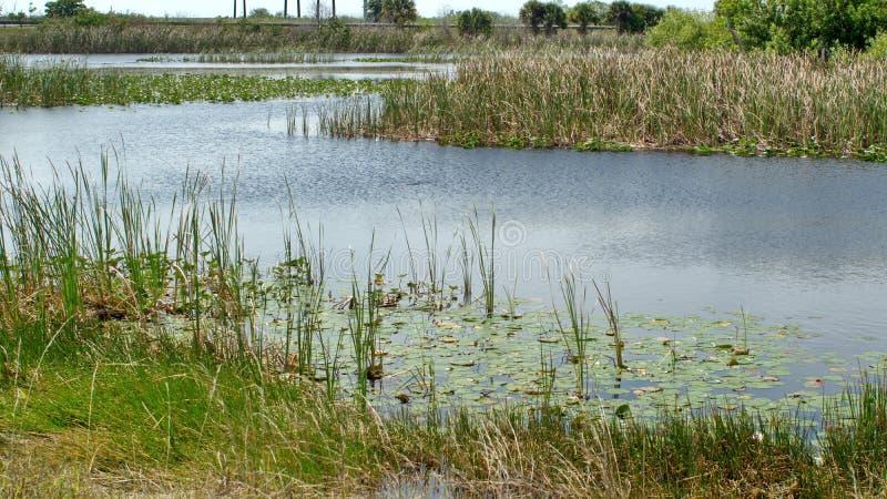 Vegetation in den Sumpfgebieten stockfotografie