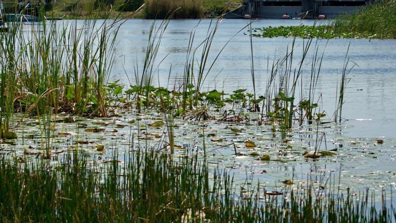 Vegetation in den Sumpfgebieten lizenzfreie stockfotos